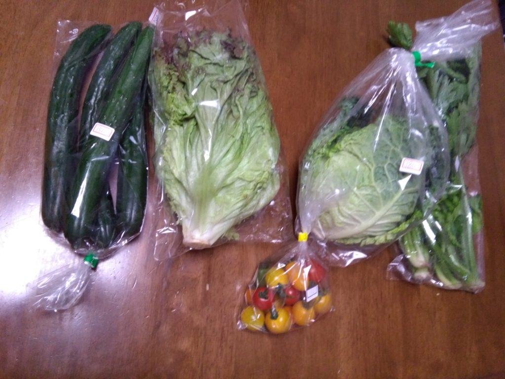 買った野菜2